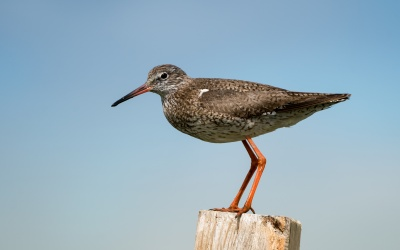 Einzelne Vögel im Wattenmeer
