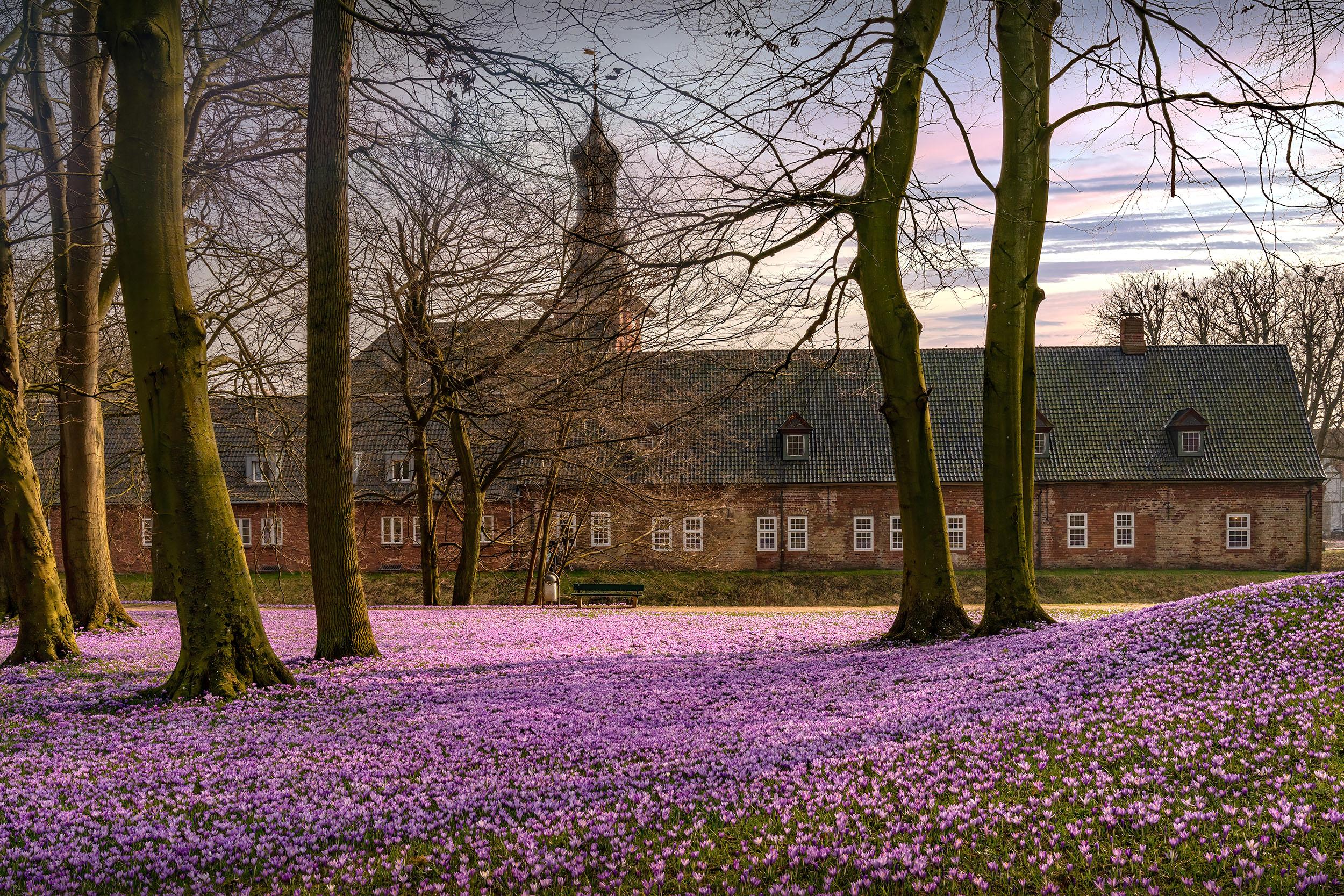 Krokusblüte am Schloss Husum